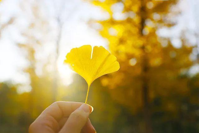 这个秋天,岁月静好美文
