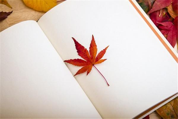 散文・一本书